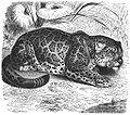 Brehms Het Leven der Dieren Zoogdieren Orde 4 Jagoear (Felis onza).jpg