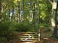 Bridleway through Bensgrove Wood - geograph.org.uk - 590517.jpg