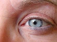 Blue eyes.photos