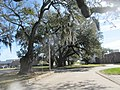 Brookhollow Esplanade Oaks, Jefferson Parish, Louisiana, January 2021 03.jpg