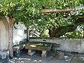 Buchlov, kamenný stůl a lípa neviny 01.jpg