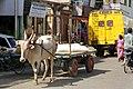 Bullock cart (4828880973).jpg