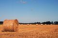 Bundles of hay (3881526371).jpg