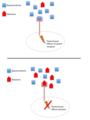 Buprenorphine-naloxone action at opioid receptor.png