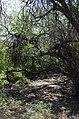 Butcher Jones Trail, Burro Cove and Beyond, Tonto National Park, Arizona - panoramio (24).jpg
