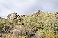 Butcher Jones Trail to Pinter's Point Loop, Tonto National Park, Saguaro Lake, Ft. McDowell, AZ - panoramio (55).jpg