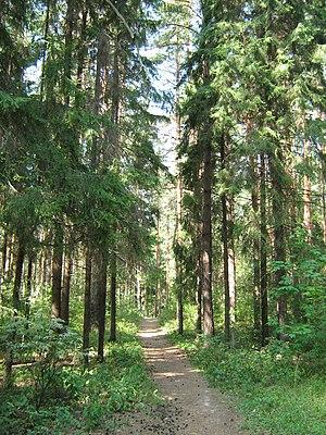 Zelyony Gorod - On a trail in Zelyony Gorod, near Kstovo
