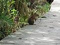 CINLB - 20120909 - écureuil sol.JPG
