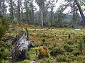 CSIRO ScienceImage 11282 Cradle Mountain Tasmania.jpg