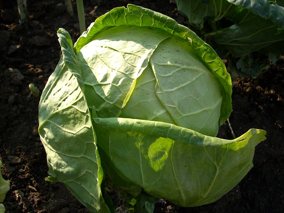 CabbageBG