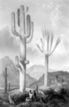 Cactaceae of the Boundary Frontispiece.png