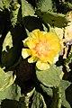 Cactus Chicago Illinois 8581.jpg