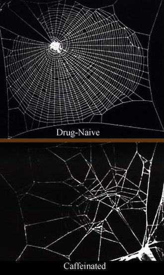 Effect of psychoactive drugs on animals - Image: Caffeinated spiderwebs