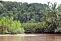 Cahuita NP-1-3 - Flickr - Ragnhild & Neil Crawford.jpg