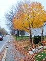 Camden, ME 04843, USA - panoramio (9).jpg