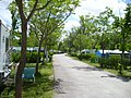 Campingplatz International in E 28300 Aranjuez - panoramio.jpg