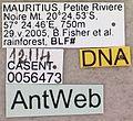 Camponotus aurosus casent0056473 label 1.jpg