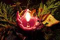 Candlelight Advent.jpg