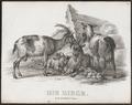 Capra hircus - 1700-1880 - Print - Iconographia Zoologica - Special Collections University of Amsterdam - UBA01 IZ21300203.tif