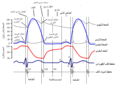 Cardiac Cycle Left Ventricle ar.png