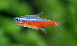 fisk representative arter