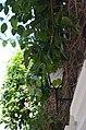Cartagena, Colombia street scenes (24428924111).jpg