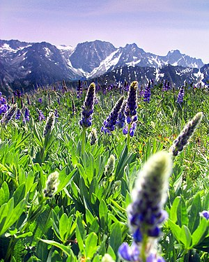 Wenatchee Mountains - Dragontail Peak from a meadow on Cashmere Mountain
