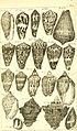 Catalogue systématique et raisonné, ou, Description du magnifique cabinet appartenant ci-devant à M. le c. de *** - ouvrage intéressant pour les naturalistes, and pour les amateurs de l'histoire (14578304248).jpg