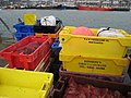 Catch of the day, Bangor harbour (2) - geograph.org.uk - 681638.jpg