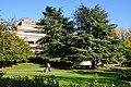 Cedrus libani - Zürich - Seefeld - Riesbach 2011-10-14 16-41-32.JPG