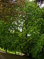 Châlons - petit jard (59).JPG