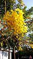 Chandelier Flowers.jpg