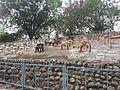 Chandigarh Rock Garden 37.jpg