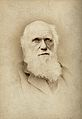 Charles Robert Darwin. Photograph by Barraud. Wellcome V0028477.jpg