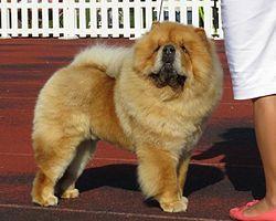 Raining Cats amp Dogs  44 Photos amp 58 Reviews  Pet Stores