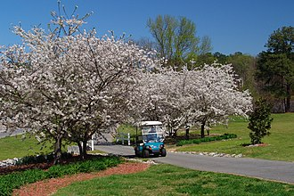 Peachtree City, Georgia - Image: City Hall Dogwoods and Golf Cart