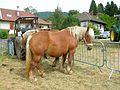 Comice agricole Revel abc10.jpg