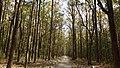 Corbett National Park, India 1.jpg