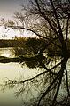 Creciente de Rio Parque Clemente Estable.JPG