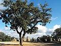 Cromeleque dos Almendres - Portugal - panoramio.jpg