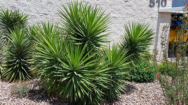 cheap succulents for sale online