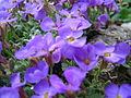 Cvetoča rastlina Nix.jpg