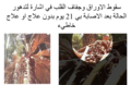 Cycas revoluta rust.png