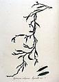 Cystoseira siliquosa — Flora Batava — Volume v9.jpg