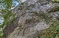 Désert Rousseau Nord Paroi Lierre Mur.jpg