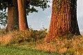 Dülmen, Kirchspiel, Börnste, Felder und Bäume -- 2017 -- 3167.jpg