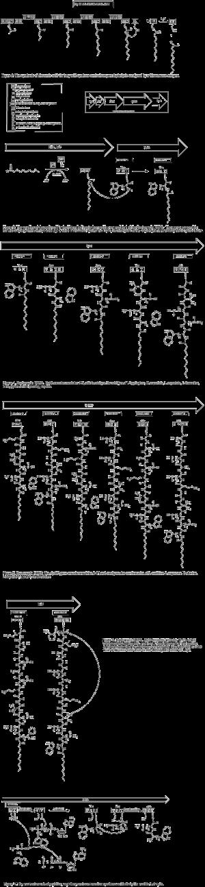 Daptomycin - Figures 1-7. Biosynthesis of daptomycin