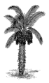 Date palm 2 (PSF).png