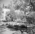 De tuin van de Church of the agony (Kerk van het heilige lijden) ook wel bekend , Bestanddeelnr 255-5333.jpg