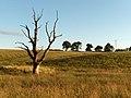 Dead tree near Culticheldoch - geograph.org.uk - 201692.jpg